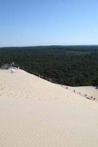 Vue sur la forêt depuis la Dune du Pilat