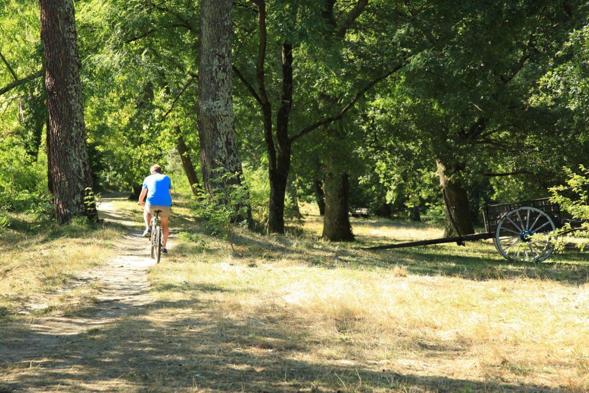 Balade à vélo dans le parc de la Chêneraie à Gujan-Mestras à la Une