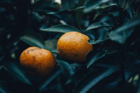 Oranges Brésil
